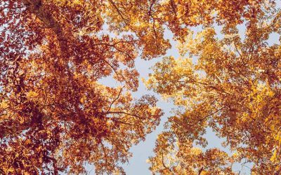 Autumn is Coming! Can You Expect Sales Growth?